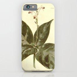 Flower justicia maculata26 iPhone Case