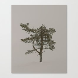 Solo tree - Minimalistic tree in Lapland, Finland against snow Canvas Print