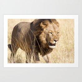 Looking for my Pride Art Print