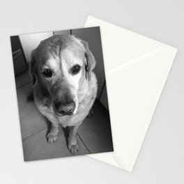 Lab Dog Stationery Cards