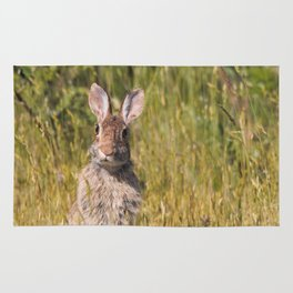 Cute and Curious Eastern Cottontail Rabbit in the Long Grass Rug