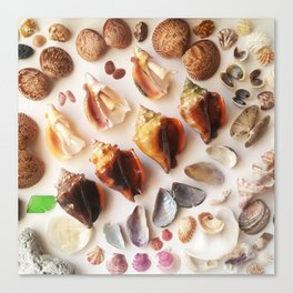 Cockles & Conch Canvas Print