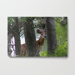 Deer at Tifft Nature Metal Print