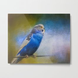 The Budgie Collection - Budgie 2 Metal Print