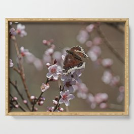 Mourning Cloak on Apricot Tree Serving Tray