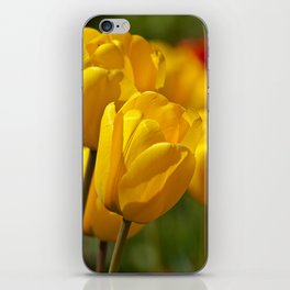 yellow tulips II iPhone Skin