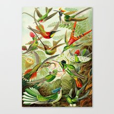 Kunstformen der Natur (Art Forms in Nature)a book of lithographic and halftones. Hummingbirds Canvas Print
