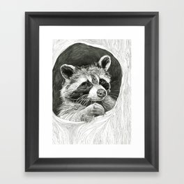 Raccoon In A Hollow Tree Drawing Framed Art Print