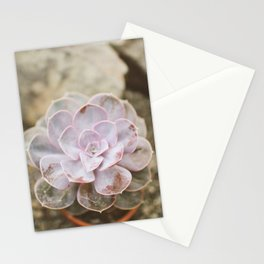 SOLO SUCCULENT  Stationery Cards