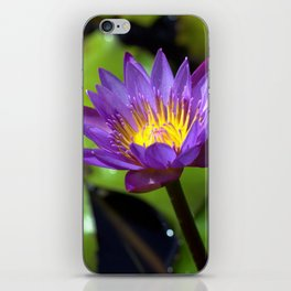 Water Lily Square Format iPhone Skin
