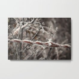Frosty Barbed Wire Metal Print