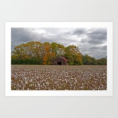 Old Barn in a Cotton Field - Wide Angle Art Print