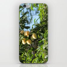 sweet fruits iPhone & iPod Skin