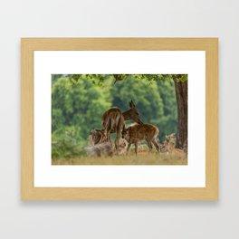 Bonding Dear Framed Art Print