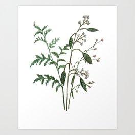 Plant Watercolor Art Print