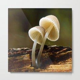 white toadstool Metal Print