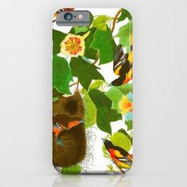 Baltimore Oriole Bird iPhone Case