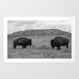 Buffalo Art Print