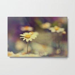 buttercup daisies Metal Print