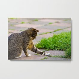 Cat playing with his prey. Metal Print