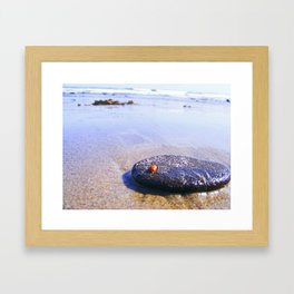 Lady Bug On Vacation Framed Art Print