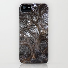 The Ancient Tree iPhone Case