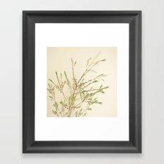 Waxflower Framed Art Print