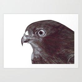 Sparrowhawk Art Print