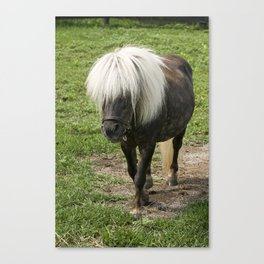 Little Silver Charm - Old Friends Equine, KY Canvas Print