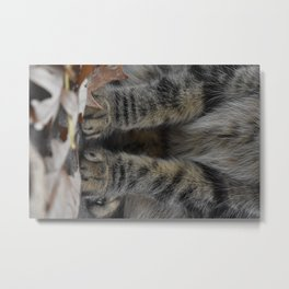 Little Paws Metal Print