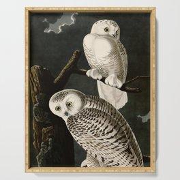 Snowy Owl Vintage Bird Illustration - Audubon Serving Tray