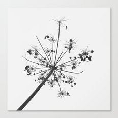 Simply lace Canvas Print