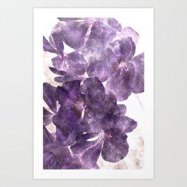 Purple Blossoming Art Print