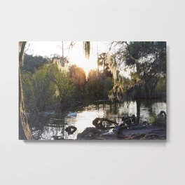 Mossy Trees Surround A Sun Reflected Lake With White Goose Metal Print