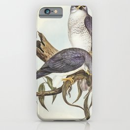 New Holland Goshawk (Astur Nova-Hollandix) illustrated by Elizabeth Gould (1804-1841) for John Gould iPhone Case