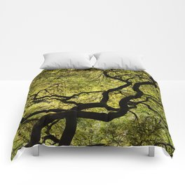 Japanese Maple Tree Comforters