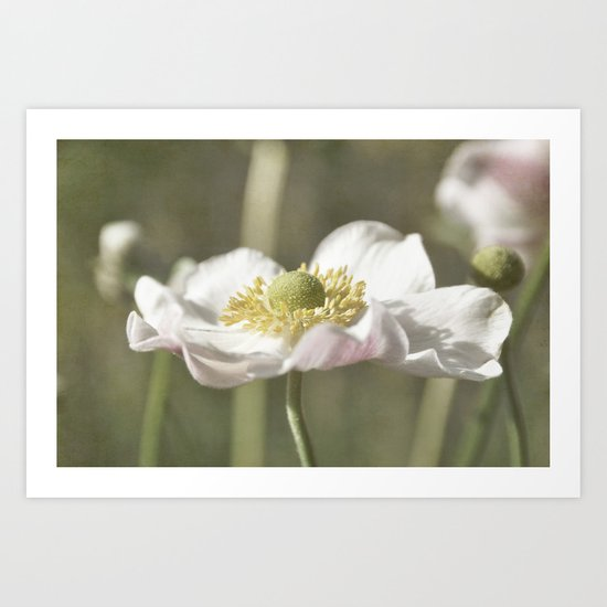 Anemone love IV Art Print