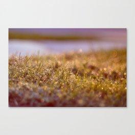 l'herbe Canvas Print