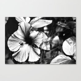 Hibiscus Infrared Canvas Print