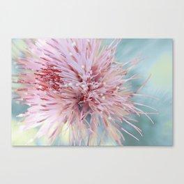 Sorbet ~ floral macro Canvas Print