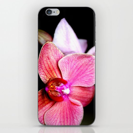 Orchid 3 iPhone & iPod Skin
