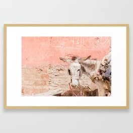 Marrakech Mule Framed Art Print