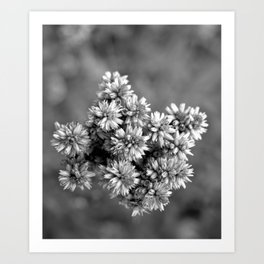 Black and White Floral Tiny Cobwebs on Flowers - Macro Close Up Art Print