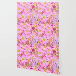 pink daisy in bloom in spring Wallpaper