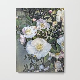 Camellias, Nara, Japan Metal Print