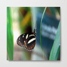 Doris Longwing Butterfly-2 Metal Print