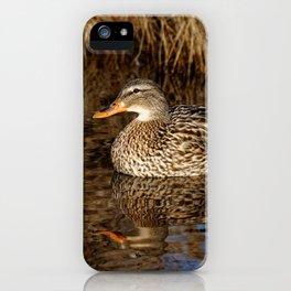 Mallard Duck Reflecting iPhone Case