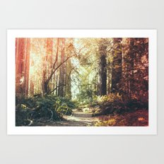 Beautiful California Redwoods Art Print