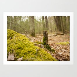 Mossy forest floor Art Print