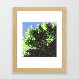 Sunlit Trees Framed Art Print